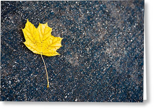 Fallen Leaf Greeting Cards - Fallen Greeting Card by Sebastian Musial