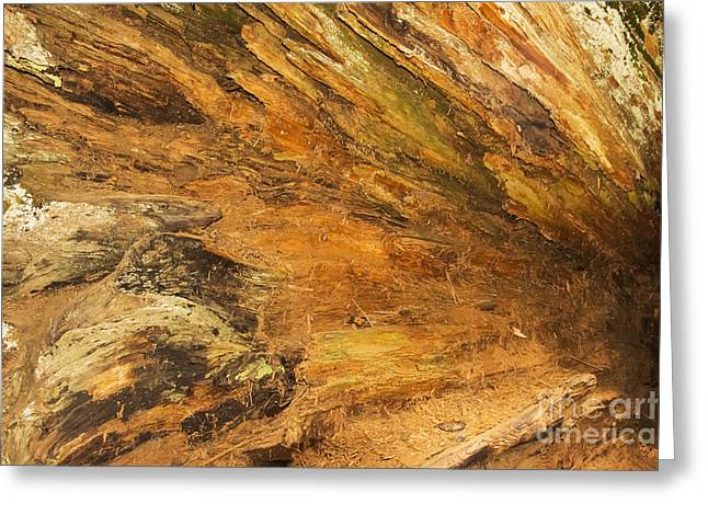 Tree Roots Greeting Cards - Fallen Sequoia Root System Greeting Card by Bob Phillips