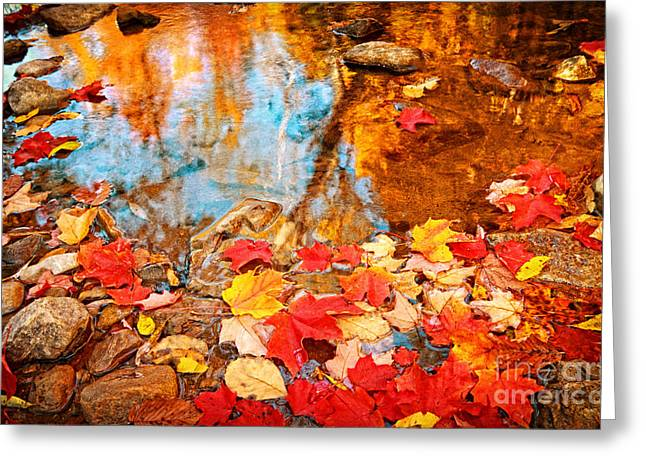 Fallen Leaf Greeting Cards - Fallen Stars Greeting Card by Charline Xia