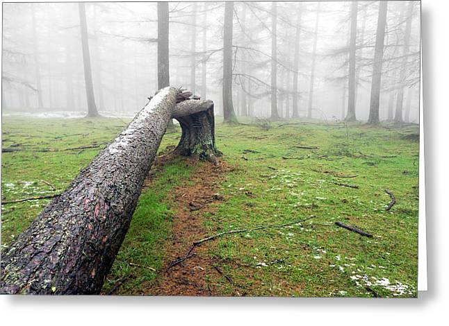 Uproot Greeting Cards - Fallen Tree Trunk Greeting Card by Mikel Martinez de Osaba