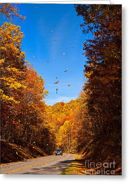 Favorite Color Blue Greeting Cards - Falling Fall Leaves - Blue Ridge Parkway Greeting Card by Dan Carmichael