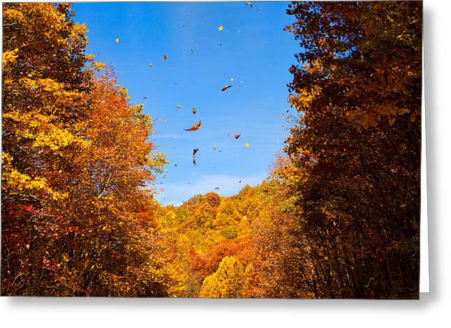 Falling Fall Leaves - Blue Ridge Parkway Greeting Card by Dan Carmichael
