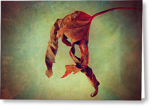 Delicate Greeting Cards - Falling Falling Greeting Card by Shirley Sirois