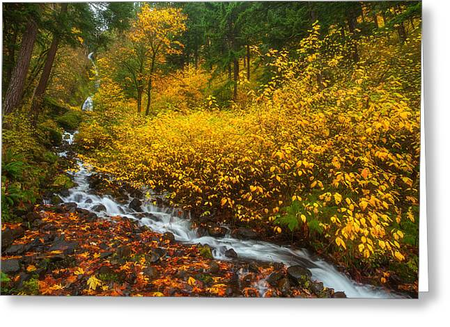 Columbia River Greeting Cards - Falling For Fall Greeting Card by Darren  White