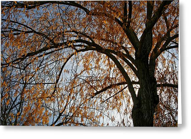 Back Lit Greeting Cards - Falling Gold Greeting Card by Laurie Search