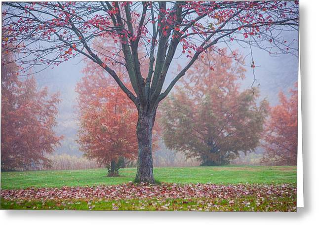 Autumn Scenes Greeting Cards - Falling Greeting Card by Karol  Livote