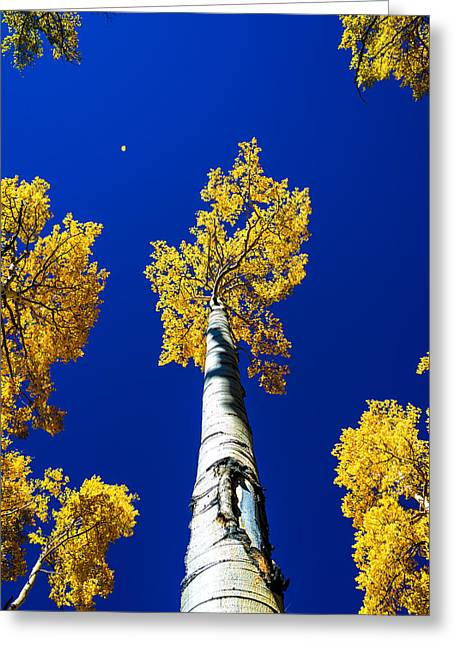 Fall Trees Greeting Cards - Falling Leaf Greeting Card by Chad Dutson