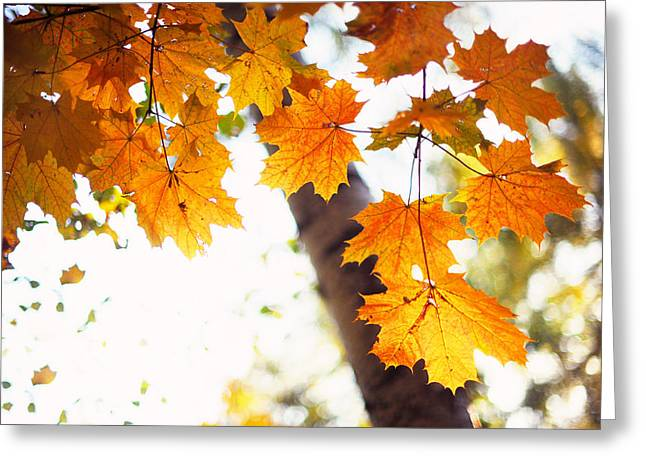 Aquarel Greeting Cards - Falling Leaves Greeting Card by Jenny Rainbow
