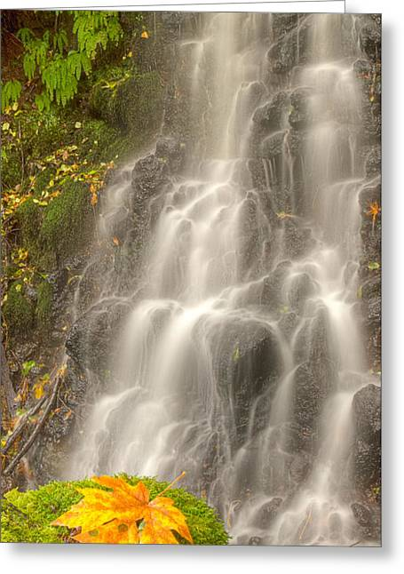 Jean Noren Greeting Cards - Falling on the Leaf Greeting Card by Jean Noren