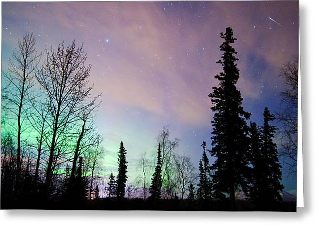 Wasilla Greeting Cards - Falling Star And Aurora Greeting Card by Ron Day