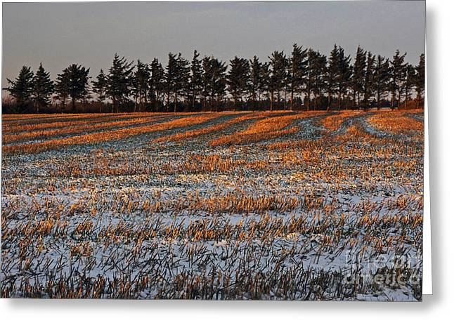 Jylland Greeting Cards - Falling to Winter Greeting Card by Inge Riis McDonald