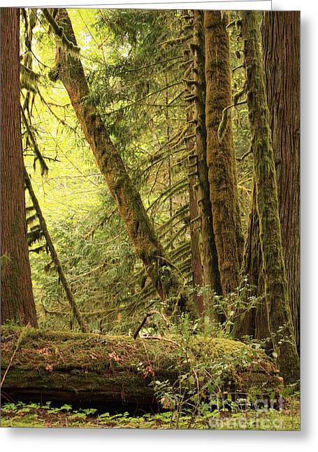 Forest Floor Greeting Cards - Falling Trees in the Rainforest Greeting Card by Carol Groenen