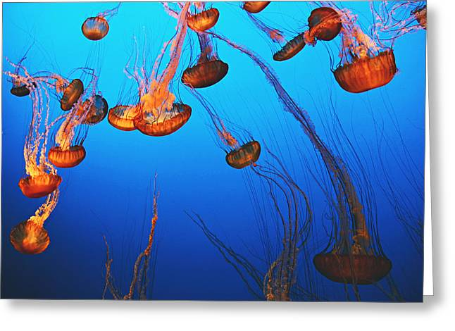 Jelly Fish Greeting Cards - Falling Under Greeting Card by Kerry Langel