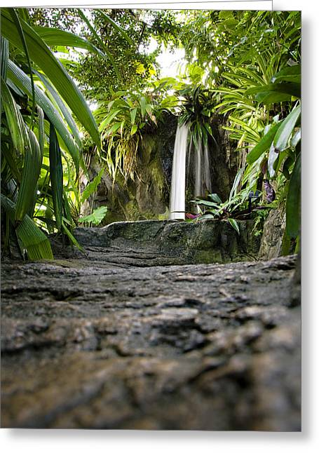 Tropical City Prints Greeting Cards - Falling Water Greeting Card by Ricky Barnard