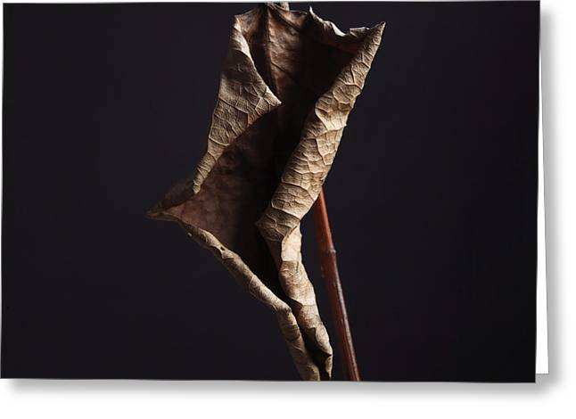 Sky Studio Greeting Cards - Fallopia japonica Greeting Card by Bernard Jaubert