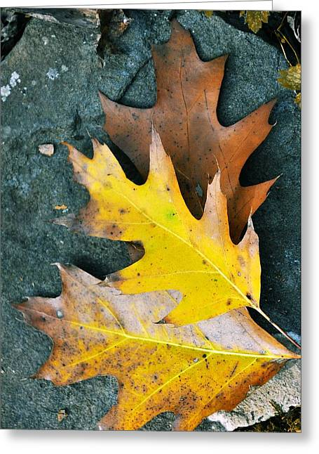 Red Fallen Leave Greeting Cards - Falls Carpet Greeting Card by JAMART Photography
