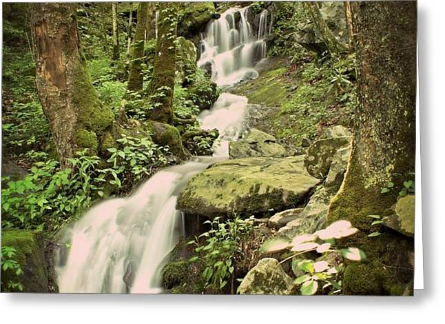 Falls In The Smokies Greeting Card by Marty Koch