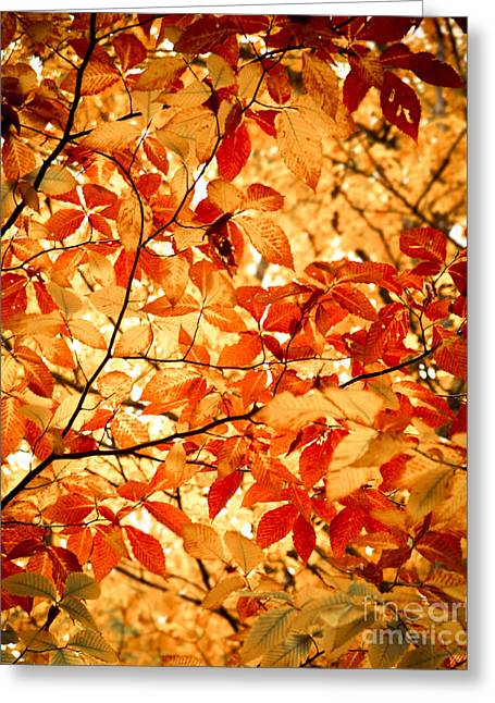 Landscape Photograpy Greeting Cards - Falls Leaves Greeting Card by Sonja Quintero
