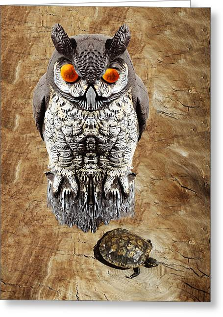 Imaginary Owl Greeting Cards - False Owl and Stuffed Turtle Greeting Card by Bruce Iorio