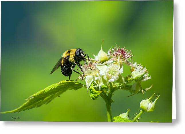 Bees Greeting Cards - Fame is a bee Greeting Card by Bob Orsillo