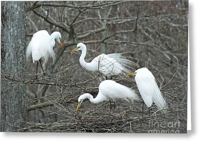 Bird Rookery Swamp Greeting Cards - Family Affair Egrets Louisiana Greeting Card by Lizi Beard-Ward