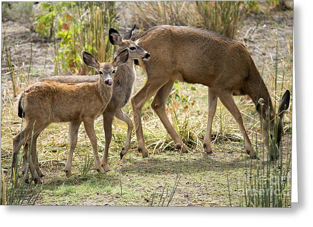Graze Greeting Cards - Family Affair Greeting Card by Mike Dawson