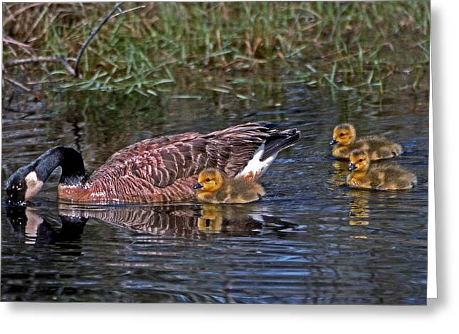 Photos Of Birds Greeting Cards - Family Affair Greeting Card by Skip Willits