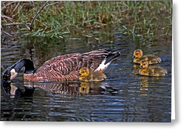 Family Affair Greeting Card by Skip Willits