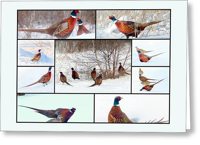 Annapolis Valley Greeting Cards - Family Album Greeting Card by Karen Cook
