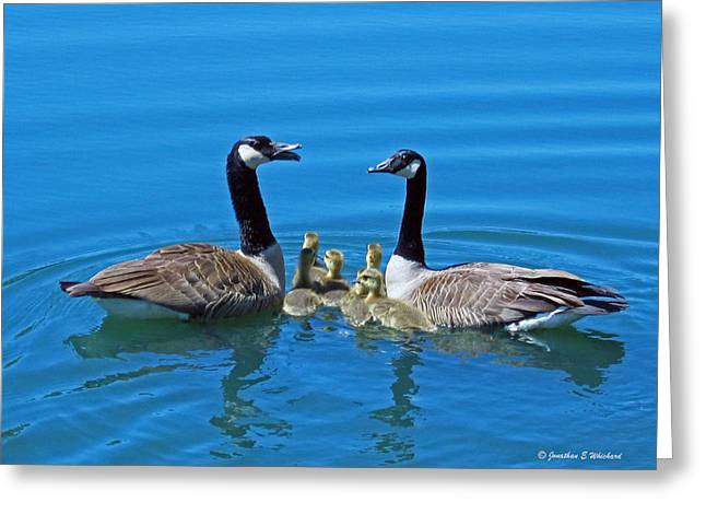 Family Canada Geese Greeting Card by Jonathan Whichard