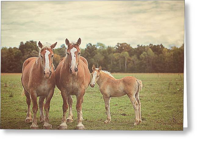 Horse Farm Greeting Cards - Family Greeting Card by Carrie Ann Grippo-Pike