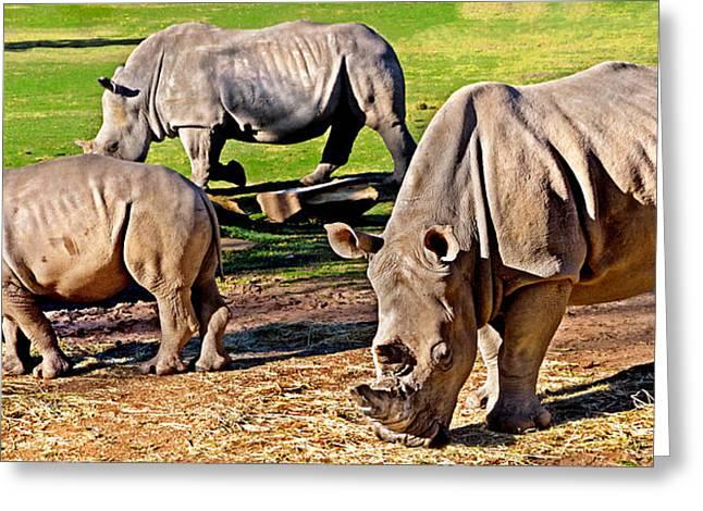Rhinoceros Greeting Cards - Family Feast Greeting Card by Miroslava Jurcik
