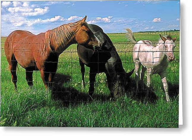 Prairies Paintings Greeting Cards - Family Meal Greeting Card by Terry Reynoldson