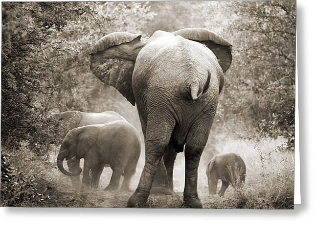 Reserve Greeting Cards - Family of elephants Greeting Card by Delphimages Photo Creations