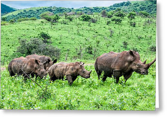 One Horned Rhino Greeting Cards -  Rhino Family Greeting Card by Maria Coulson