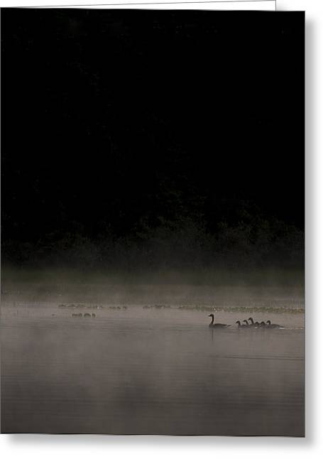 Geese Silhouette Greeting Cards - Family on the Lake Greeting Card by Aaron S Bedell