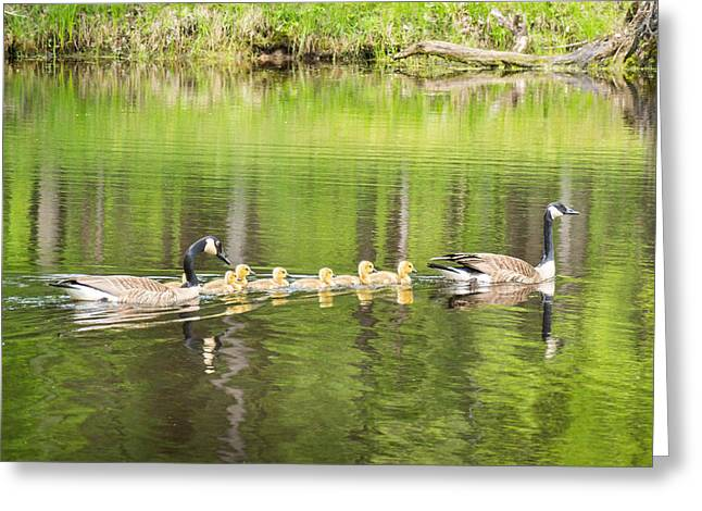 Reflections In River Greeting Cards - Family Outing Greeting Card by Bill Pevlor