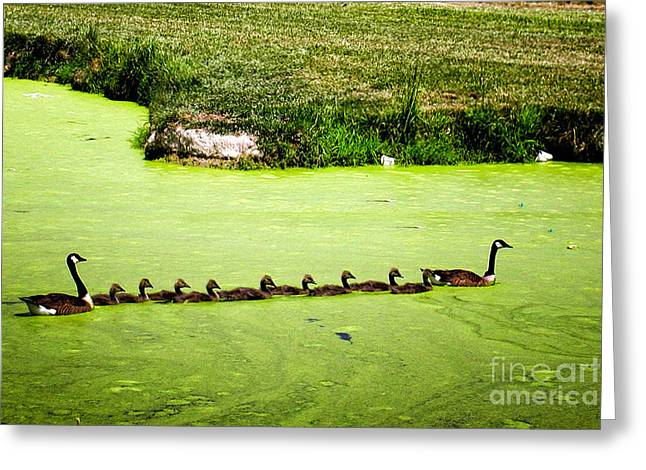 Recently Sold -  - Algae Greeting Cards - Family Outing Greeting Card by Gerlinde Keating - Keating Associates Inc