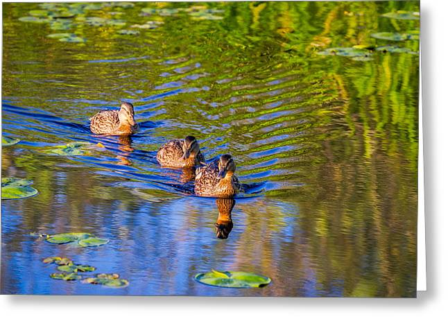 Lilly Pad Greeting Cards - Family Outing on the Lake Greeting Card by Ken Stanback