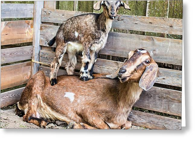 Barn Yard Greeting Cards - Family portrait Greeting Card by Kent Taylor