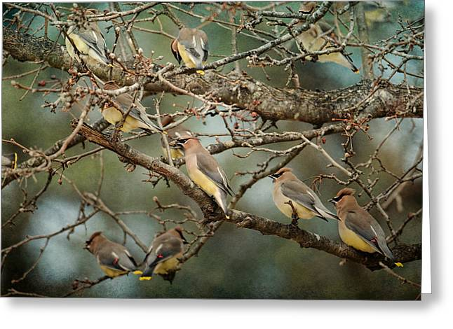 Cedar Waxwing Greeting Cards - Family Reunion - Cedar Waxwings Greeting Card by Jai Johnson