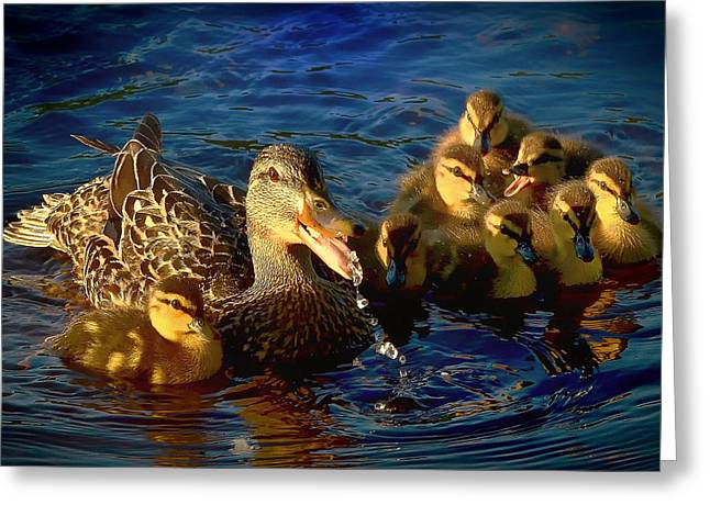 Ducklings Greeting Cards - Family Swim Greeting Card by Alain Audet