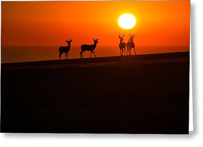 Recently Sold -  - Pch Greeting Cards - Family Time. Greeting Card by Wasim Muklashy