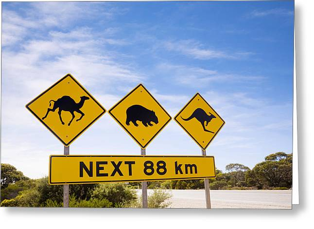 Camels Photographs Greeting Cards - Famous Australian Sign Camels Wombats Kangaroos Greeting Card by Colin and Linda McKie