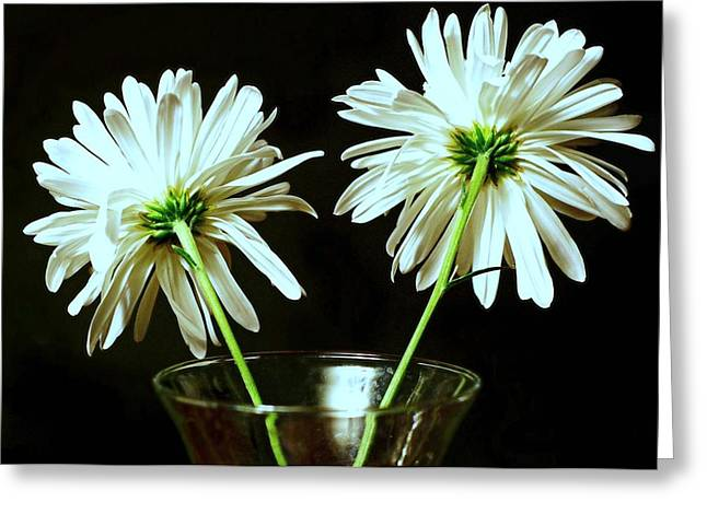 Garden Of Daisies Greeting Cards - Fan Flare Greeting Card by Diana Angstadt
