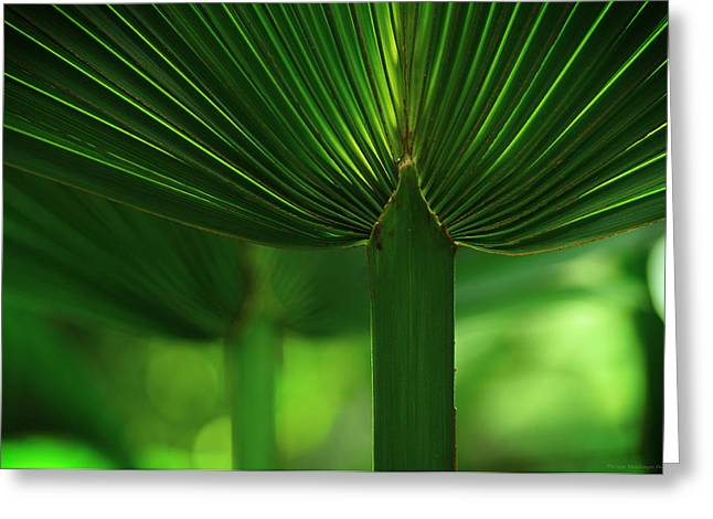 Eventail Greeting Cards - Fan palm Greeting Card by Philippe Meisburger