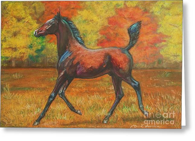 Equestrian Prints Pastels Greeting Cards - Fantail- arabian foal Greeting Card by Dorota Zdunska