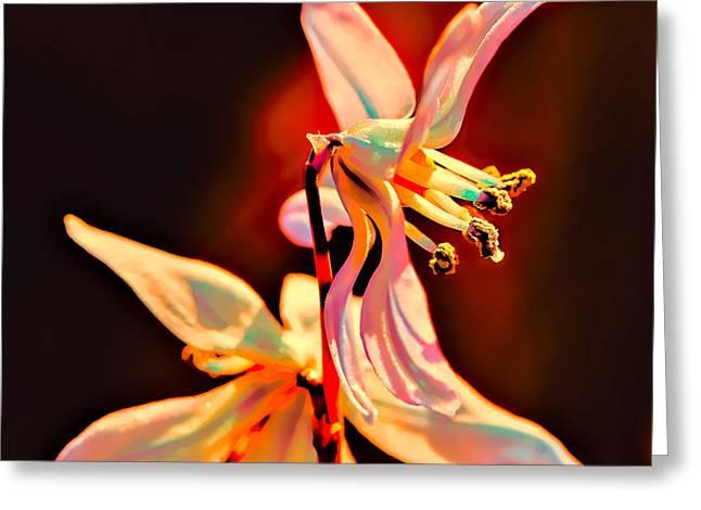 Fantasia Greeting Card by Leif Sohlman
