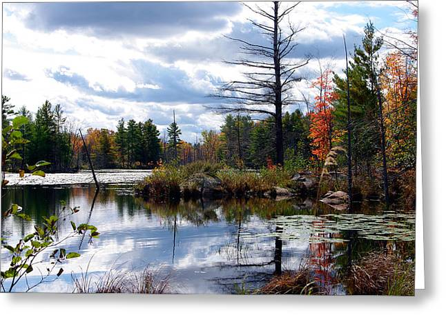 Paul Wash Greeting Cards - Fantastic Fall Greeting Card by Paul Wash