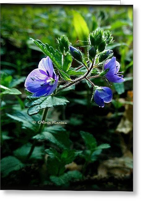 Olivia Narius Greeting Cards - Fantastic Flower Greeting Card by Olivia Narius